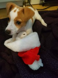 Patch-and-his-Santa-hat-scaled